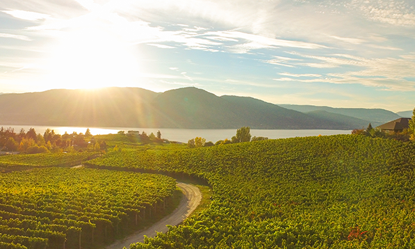 Sip local: April is #BCWineMonth!