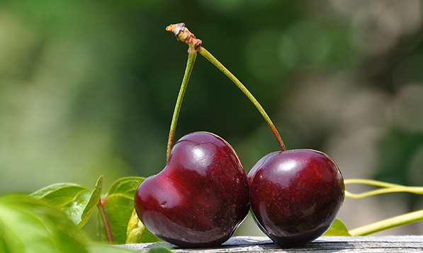 Surprising (and sweet!) facts about BC cherries