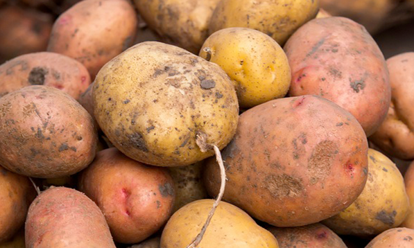 Dig deep: get to know BC's potatoes!