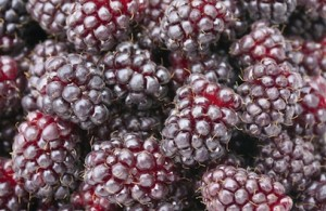 Boysenberries