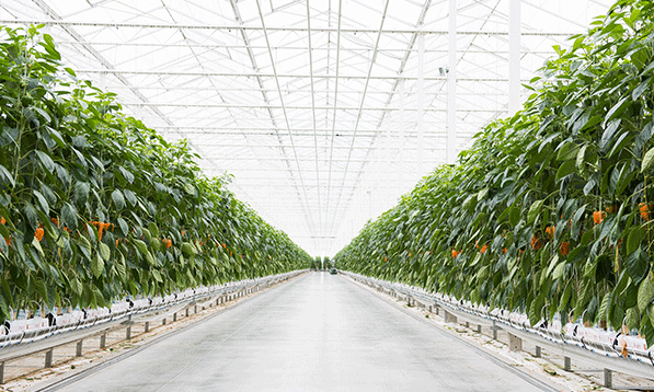 Blog-Image-Gallery---Greenhouse-View