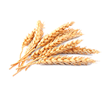 Homepage-grain-icon