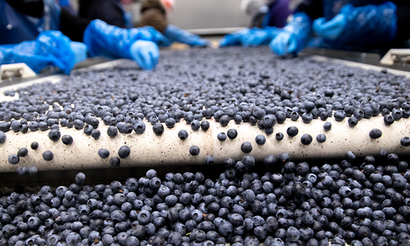 Courtesy of BC Blueberry Council