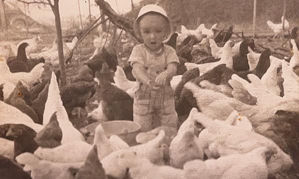 Firbank Farm